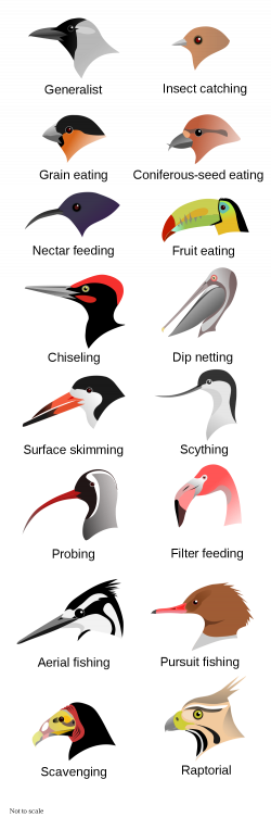 Evolution at Work: Beak Adaptations of Birds | Earthly Mission