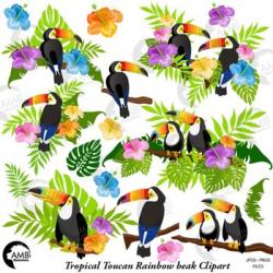 Toucan Clipart, Rainbow Toucan Clipart, Tropical Birds Clipart, AMB-2456