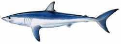 Orange Beach Fishing Charters Gulf Shores Fishing Charters Deep Sea ...