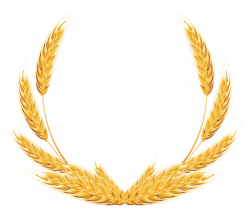 Wheat Decoration PNG Clipart Image | Gallery Yopriceville - High ...