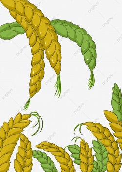 Wheat Grain Image, Wheat Clipart, Wheat, Ears Of Corn PNG ...