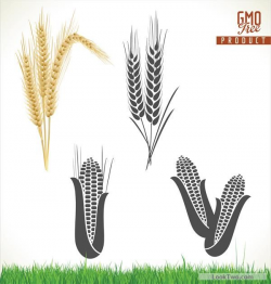 Corn and wheat vector material free vector download | Design ...
