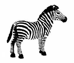 Zebra Clipart Free Stock Photo - Public Domain Pictures