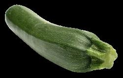 Zucchini PNG Image - PngPix